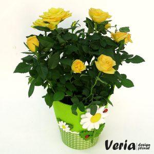 trandafir galben pentru inceputul scolii