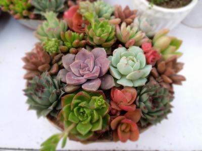 Top 5 plante suculente pentru buchete de flori si aranjamente florale