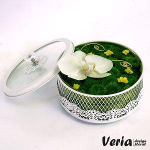cutie cu flori orhidee phalaenopsis alba