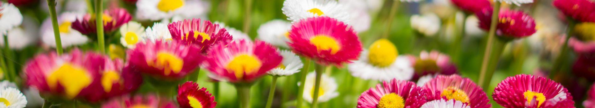 DIY: Prima zi de martie, primul mărțișor floral făcut chiar de tine